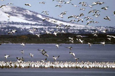 Klamath Wildlife Refuge birding