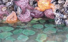 starfish and other tide pool creatures
