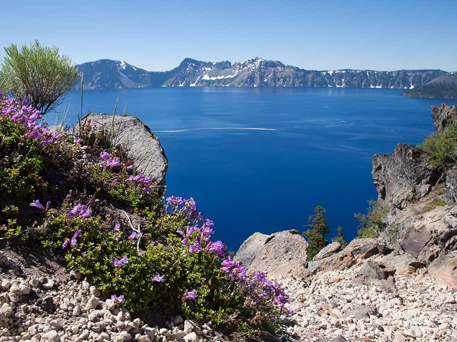 Crater Lake National Park, Wildflowers