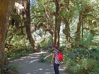Olympic National Park, temperate rain forest