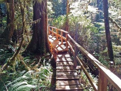 Pacific Rim National Park trail