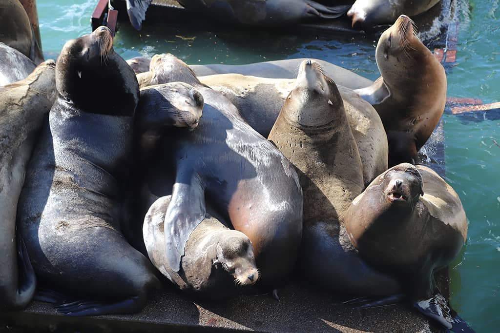 Newport, Oregon Sea Lions