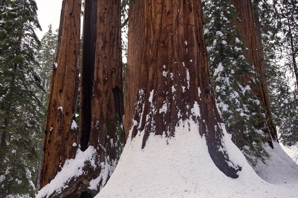 Sequoia National Park on our California Winter tour