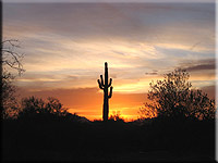 Saguaro Sunset Southwest Adventure Tour