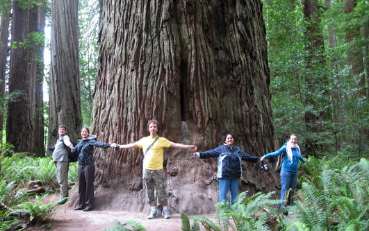 Redwood Tree Group Photo