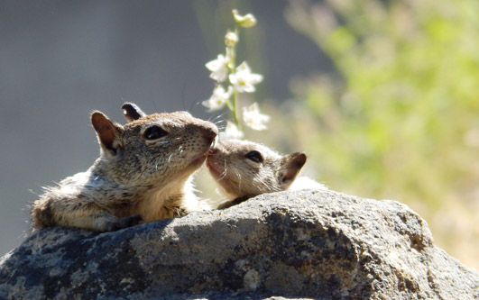Closeup of Two Squirrels