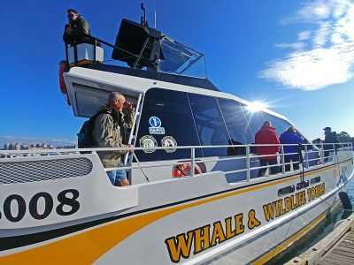 Whale watching tours in Victoria