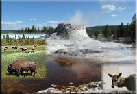 Yellowstone Wildlife and Wild West Tour